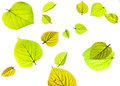 An arrangment of spring leaves Royalty Free Stock Photo