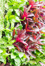 Array of bromeliad vertical garden suitable for narrow space in the city Stock Photos