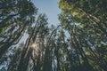 Arrayan trees Royalty Free Stock Photo