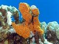 Arrecife de coral con la gran esponja de yellow sea en la parte inferior del mar tropical Fotografía de archivo libre de regalías