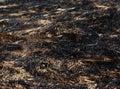 Arson dry grass summer fire Stock Photos