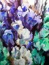 Watercolor art background blue violet iris flowers bouquet vivid Royalty Free Stock Photo