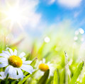 Art abstract background summer flowers in grass Stock Images