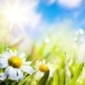 Arte flores en hierba