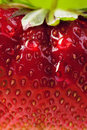 Art background summer strawberry farm Royalty Free Stock Photo