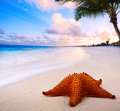 Art beautiful landscape with sea star on the beach Royalty Free Stock Photos