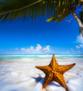 Art beautiful sea star on the beach Stock Images