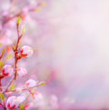 Art Beautiful spring blossoming tree on sky background Royalty Free Stock Photo
