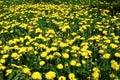 Art Beautiful spring flowers yellow background