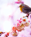 Art beautiful spring morning nature background Stock Image
