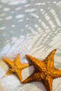 Art beautiful starfish on a beach sand with wave Royalty Free Stock Image