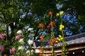 Art of chrysanthemum saga kiku flowers kyoto japan japanese traditional gardening at japanese garden in jaoan autumn Royalty Free Stock Photos