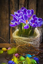 Art Easter Egg basket wooden card crocus spring flower feather Stock Photos