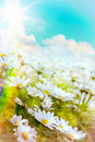 Art high light summer flowers natural background bright Royalty Free Stock Images