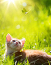 Art little cat kitten hunting a butterfly