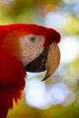 Art macaw parrot head tropical Royalty Free Stock Photos