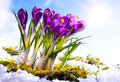 Art Spring florwer background Stock Photo