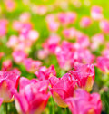 Art spring flowers background Royalty Free Stock Photo