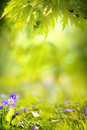 Art spring landscape background abstract green Stock Photography