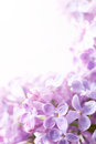Art Spring lilac abstract background Royalty Free Stock Photo