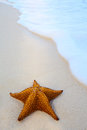 Art starfish on a beach sand with wave Stock Image