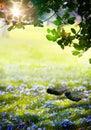 Art sunlight en el bosque verde de pascua tiempo de primavera Imagen de archivo libre de regalías