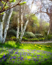 Art Sunlight in the green forest, spring time Royalty Free Stock Photo