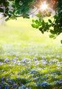 Art sunlight na floresta verde de easter tempo de mola Imagens de Stock Royalty Free