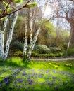 Art sunlight na floresta verde tempo de mola Fotografia de Stock