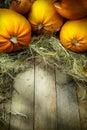 Art thanksgiving pumpkins autumn background Royalty Free Stock Photo