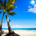 Art untouched caribbean tropical beach island Stock Photography