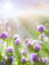 Art spring natural background, wild clover flowers