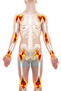 Arthritis Joints Pain Anatomy Male concept Royalty Free Stock Photo