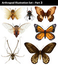 Arthropods diferrent species of on white background Royalty Free Stock Photos