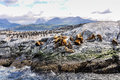 Artic wildlife, Beagle Channel, Ushuaia, Argentina Royalty Free Stock Photo