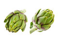 Artichoke isolated on white Royalty Free Stock Photo