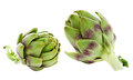 Artichoke isolated on white background Royalty Free Stock Photo