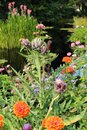 An Artichoke Plant, Zinnias, Asters and Red Fountain Grass In Front of a Pond
