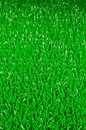 Artifical grass background texture for your design Royalty Free Stock Photos