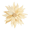 Artificial flower made by wood isolated on white