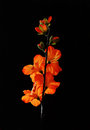 Artificial flowers on black background Stock Images