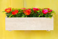 Artificial flowers in wooden box hang on the bright yellow wall Stock Photo