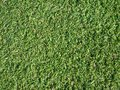 Artificial grass close up of Royalty Free Stock Photos