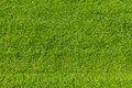 Artificial grass texture for background football field Stock Image