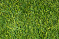 Artificial green grass background Royalty Free Stock Images