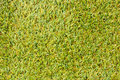 Artificial green grass grasses turf background Stock Image