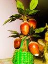 Artificial Mango