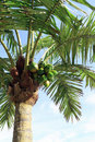 Artificial palm tree Stock Image