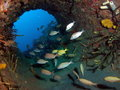 Artificial Reef Royalty Free Stock Images