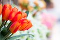 Artificial tulip closeup flowers bouquet Stock Photo